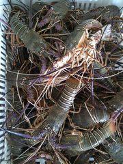Рыба свежемороженная от прямых производителей