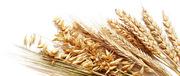 Закупаем зерно