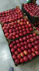 Яблоки и груши из Польши